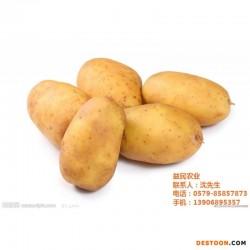 马铃薯叶甲|益民农业(已认证)|义乌马铃薯
