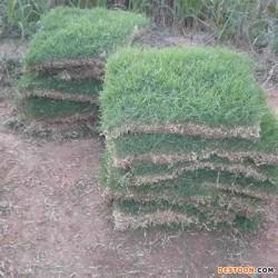 海南马尼拉草皮