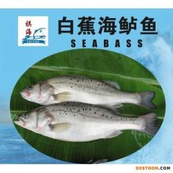 白蕉海鲈鱼、尖吻鲈鱼、美国红鱼