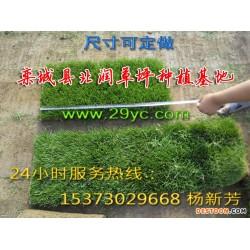 高羊茅草坪,绿化草皮草籽,栾城草坪