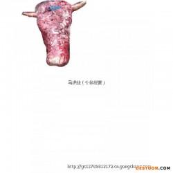 山东阳信带皮牛头、牛头肉+大量批发