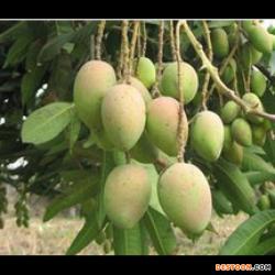 望谟县纳绒惠兴种养殖农民专业合作社