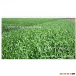 大麦苗粉200目供应100%纯天然有机大麦苗粉(200目出口级)