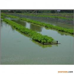 梁山县淡水养殖