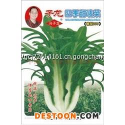 高产甜唛菜种子,原厂彩袋包装约8克批发 阳台盆栽大田生产