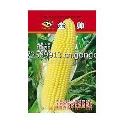 高产大穗的水果玉米种子,畅销品种