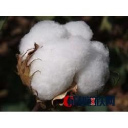 棉花专用肥