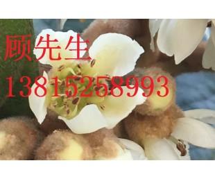 造型瓜子黄杨、别墅景观工程、造型树、苏州光福苗木基地花木市场