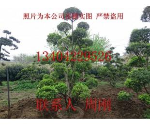 苏州别墅苗木批发、苏州花园景观设计、苏州庭院绿化苗木