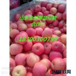 山东红富士苹果冷库苹果大量供应条红偏红纸袋苹果