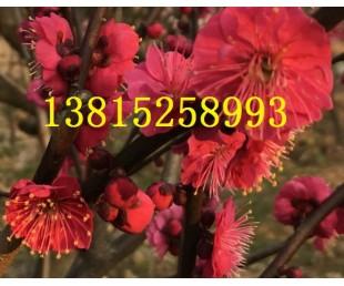 亚虎国际pt客户端_苏州别墅绿化、苏州鸿运果、苏州庭院施工、苏州绿化苗木果树