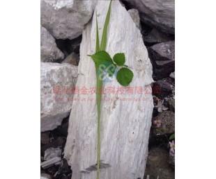 硅钙肥白色针状肥料,硅钙肥Si02 49.80%,硅钙肥Ca0 43.82%