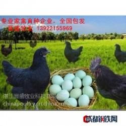 2017年绿壳蛋鸡苗报价,厂家出厂价格含运费