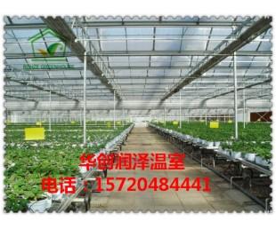 北京华创润泽温室 有立柱温室大棚造价 温室大棚
