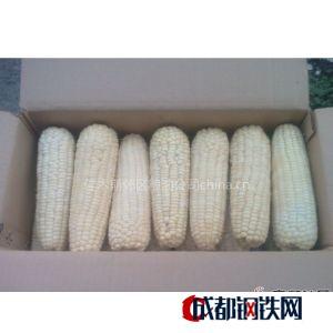 供應出售新鮮粘玉米