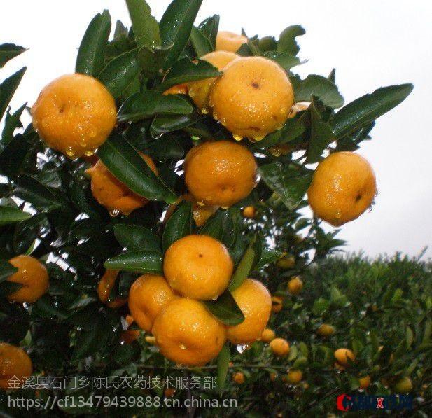 大量供應江西南豐蜜桔 特級正宗蜜桔 綠色食品