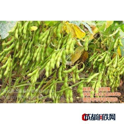 進口大豆價格、孝感大豆、壟上畜禽