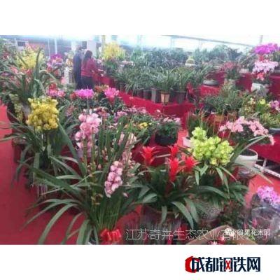 室内花卉价格