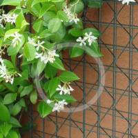 植物攀爬网,铁丝网,3D网片,佛山护栏网厂