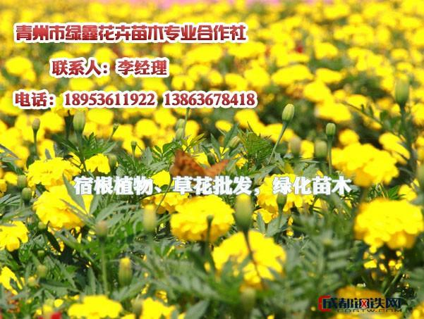 多肉植物栽培,花木苗木批发请找青州绿鑫